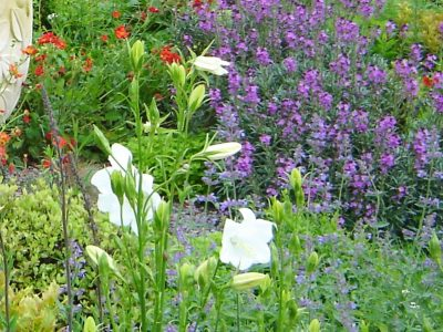 Country Garden Planting Design - After planting - Greenspace Garden Design