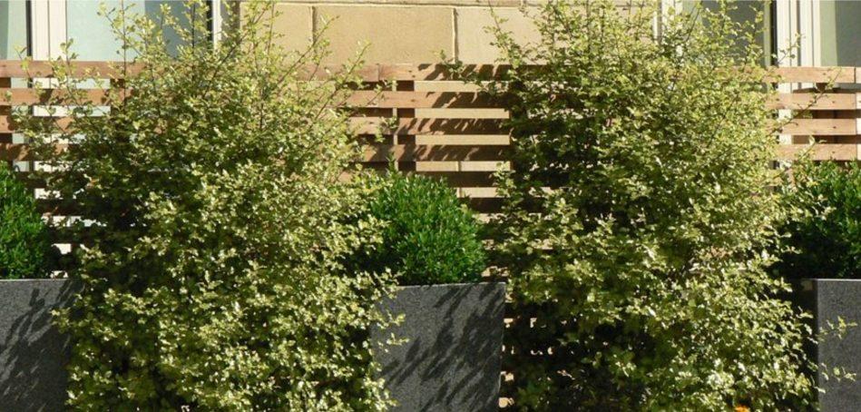 City Apartment Gardens - Greenspace Garden Design Portfolio
