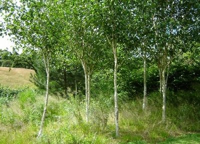 Greenspace Garden Design - Large Wildlife Garden - Boundary trees
