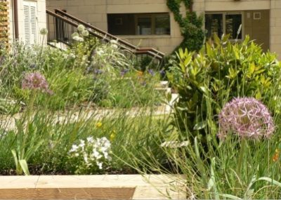 City Apartment Gardens - Raised bed planting - Greenspace Garden Design